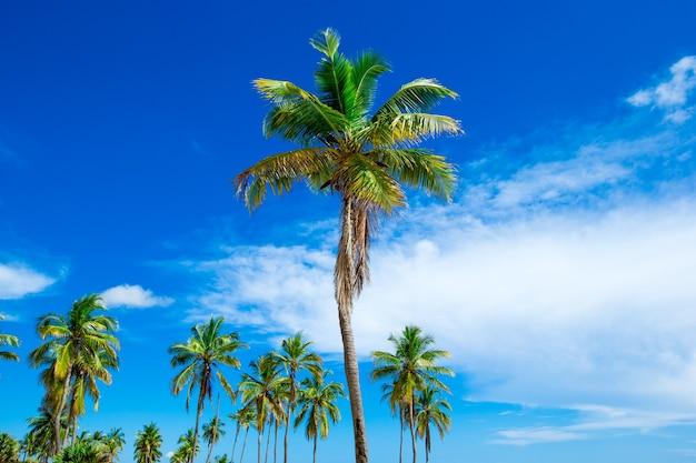 Palmen im hintergrund