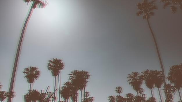 Palmen im sommer