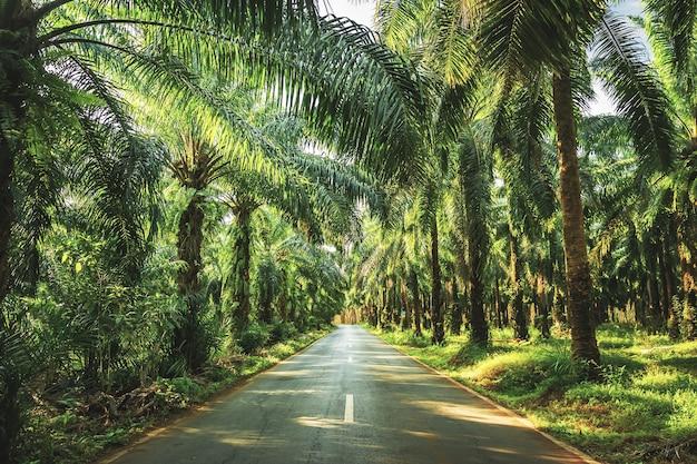 Palmen im tropischen garten