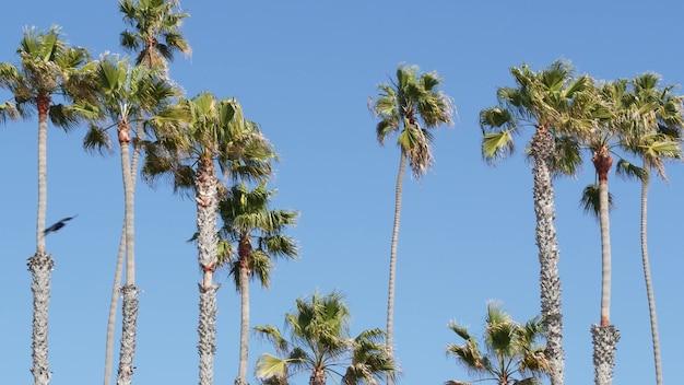 Palmen in los angeles, kalifornien, usa. sommerästhetik von santa monica und venice beach am pazifischen ozean. klarer blauer himmel und ikonische palmen. atmosphäre von beverly hills in hollywood. la-vibes.