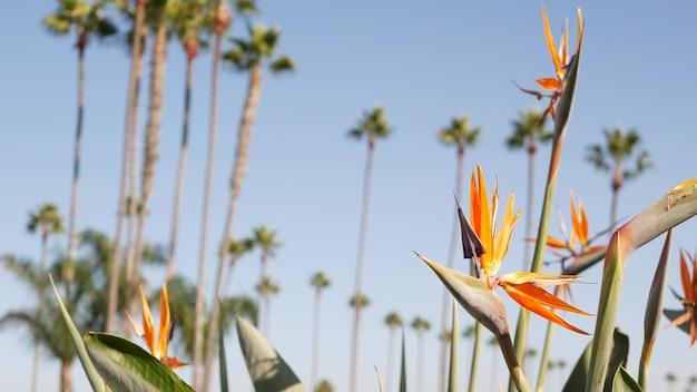 Palmen in los angeles, kalifornien, usa. sommerästhetik von santa monica und venice beach am pazifischen ozean. strelitzia paradiesvogelblume. atmosphäre von beverly hills in hollywood. la-vibes