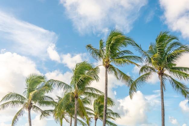 Palmen mit sonnenlicht