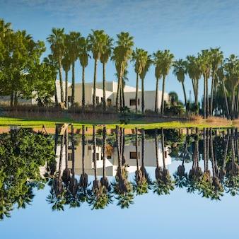 Palmen säumen neben dem wasser