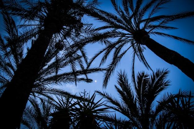 Palmen silhouettiert gegen den abendhimmel