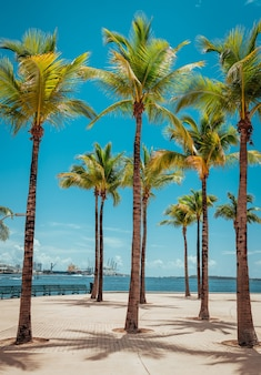 Palmen strand tropischer ort urlaub miami