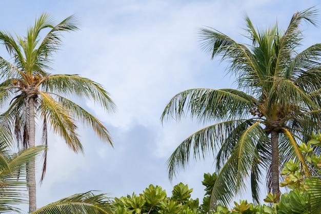Palmen und andere pflanzen mit blauem himmel