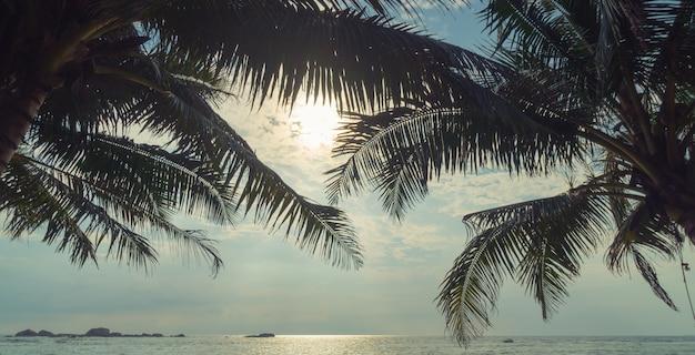 Palmen und ozean am sonnenuntergang in sri lanka.