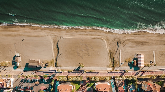Palmen und sandstrand mit einer schildkröte im sand in malaga, andalusien region von spanien.