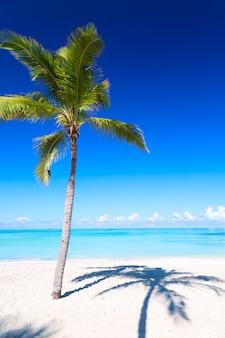 Palmen und tropischer strand in varadero