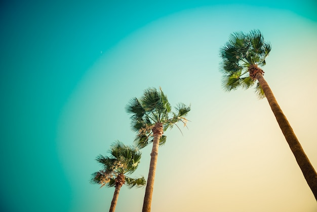 Palmen unter den strahlen des bunten sonnenuntergangs.