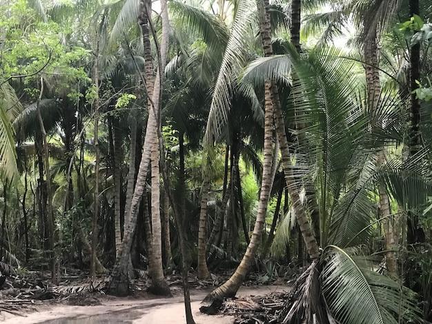 Palmen wachsen nebeneinander im dschungel