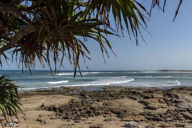 Palmenbaumrahmen, die wellen über felsen eingehen