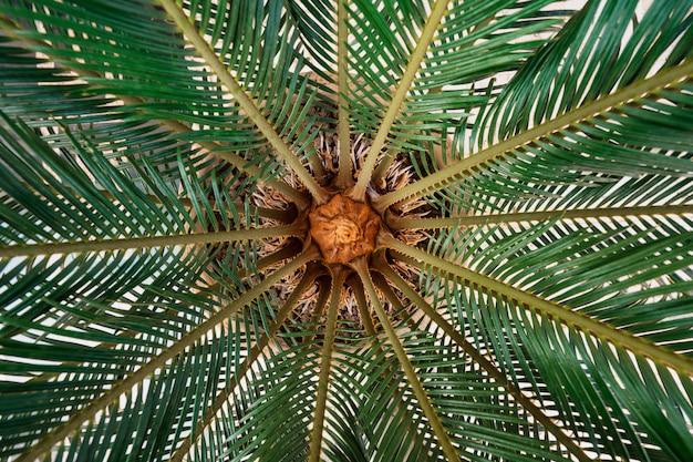 Palmenbeschaffenheit