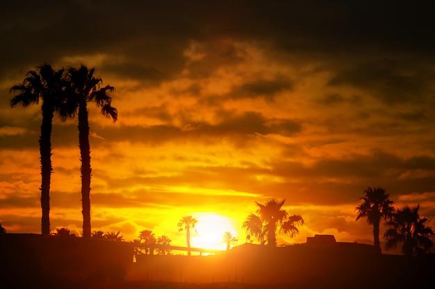 Palmeschattenbildsonnenuntergang oder -sonnenaufgang