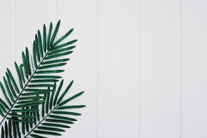 Palms blätter auf weißem holz hintergrund mit platz auf der rechten seite