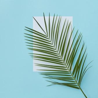 Palmzweig bedeckt leeren weißen raum auf einer blauen oberfläche kopie des raumes mit raum unter dem text flach lag