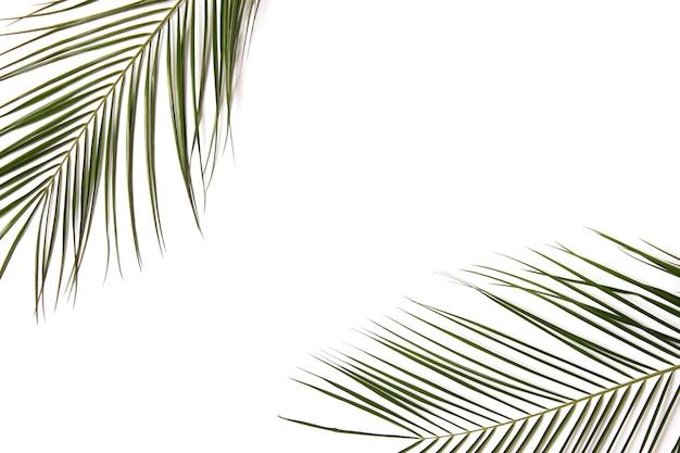 Palmzweige auf einer farbigen hintergrunddraufsicht mit platz für text