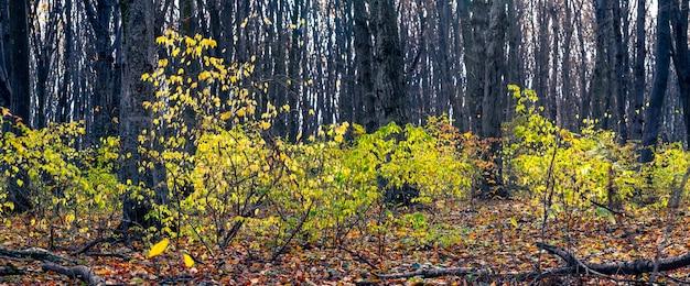 Panorama des herbstwaldes mit gelben blättern und umgestürzten bäumen