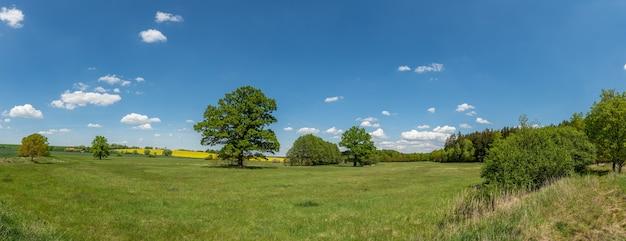 Panorama große eichen auf wiese neben rapsfeld und anderen bäumen in der ferne, weiße wolken auf blauem himmel