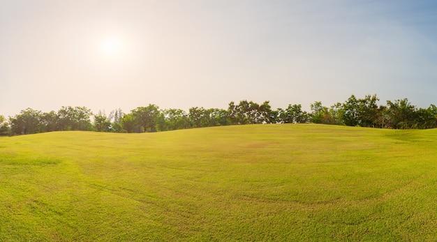 Panorama grünes gras auf dem golfplatz in der abendzeit, panorama grüne feldlandschaft
