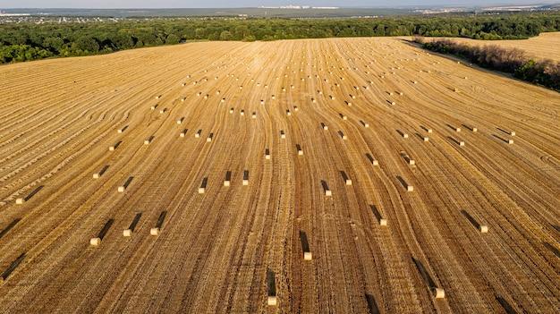 Panorama-luftaufnahme über der spitze einer sommergelb- und -goldlandschaft des landwirtschaftlichen gemähten roggenfeldes.