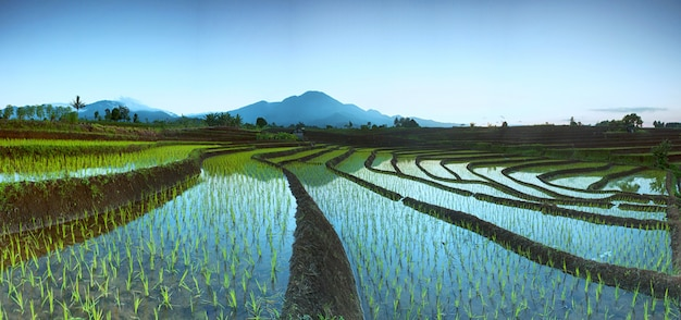 Panorama von reisfeldern mit schönheitsmorgen und berg in indonesien