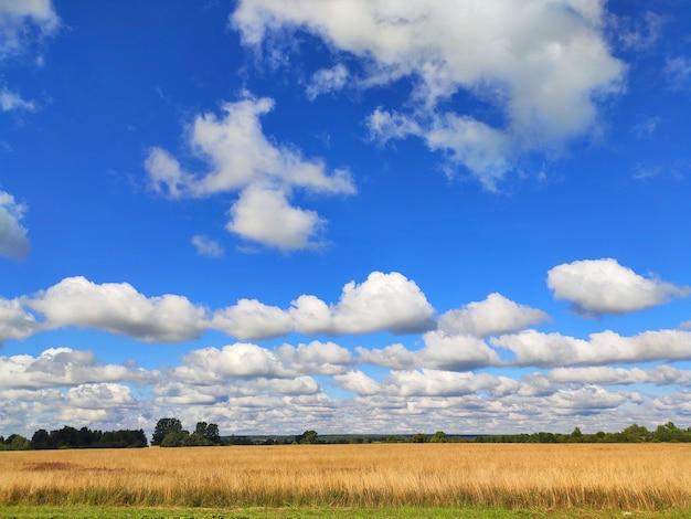 Panoramablick auf die grünen felder der landschaft
