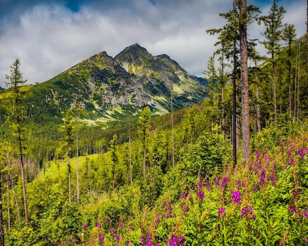 Panoramablick auf die majestätische tatra in der slowakei. sommer idyllische landschaft. mächtige berge, wilde wälder und blühende wiesen. farbspritzer.