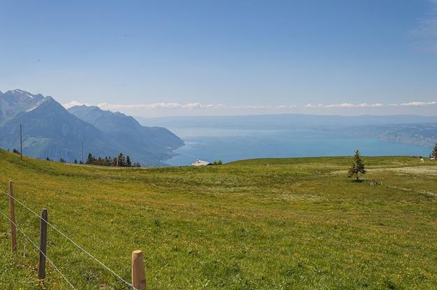 Panoramablick auf lavaux, schweiz mit zaun und grünem gras
