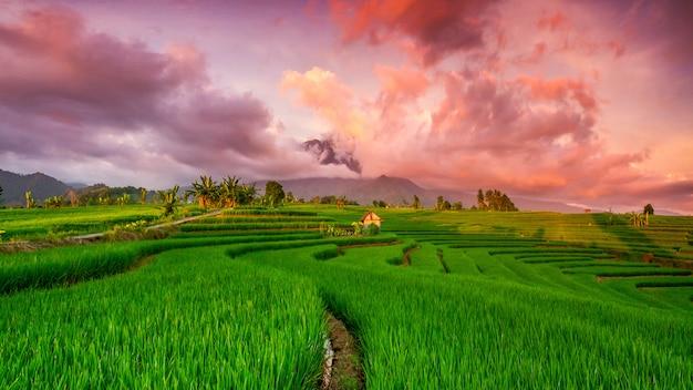 Panoramablick auf reisfelder mit wunderschönem himmel über den bergen in nord-bengkulu