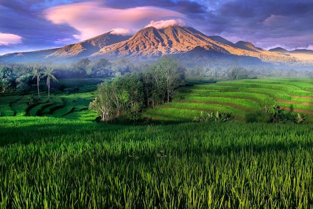 Panoramablick auf reisfelder, wenn grün mit leuchtenden bergen