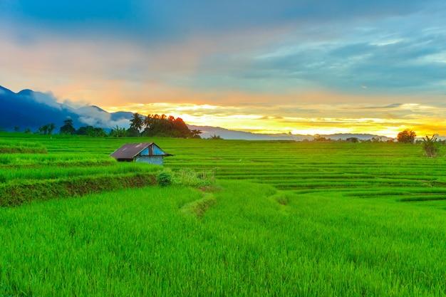Panoramablick des dorfes mit grünen reisfeldern und bergen an einem schönen sonnenaufgang in nordbengkulu, indonesien