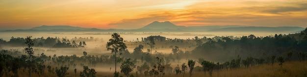 Panoramablick schöne sonnenaufgang landschaft des waldes