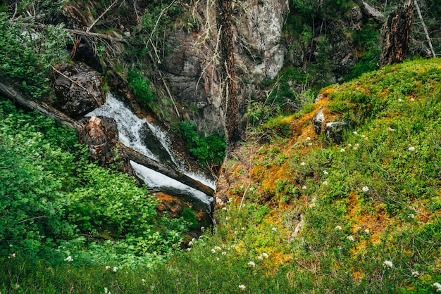 Panoramablick von der grünen klippe zum schönen wasserfall im wald unter reicher vegetation. atmosphärische waldlandschaft mit gefallenem baumstamm im gebirgsbach. landschaft mit quellwasser unter wildpflanzen.