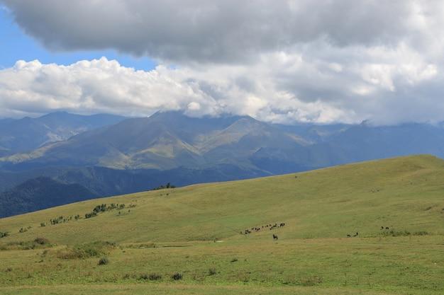 Panoramasicht auf berge und talszenen im nationalpark dombay, kaukasus, russland, europa. dramatischer blauer himmel und sonnige sommerlandschaft