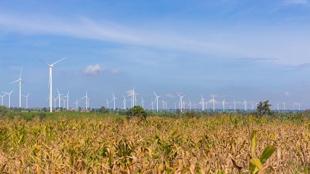 Panoramisch von eco-energie, von windturbine auf dem feld des grünen grases und des mais über dem blauen bewölkten himmel