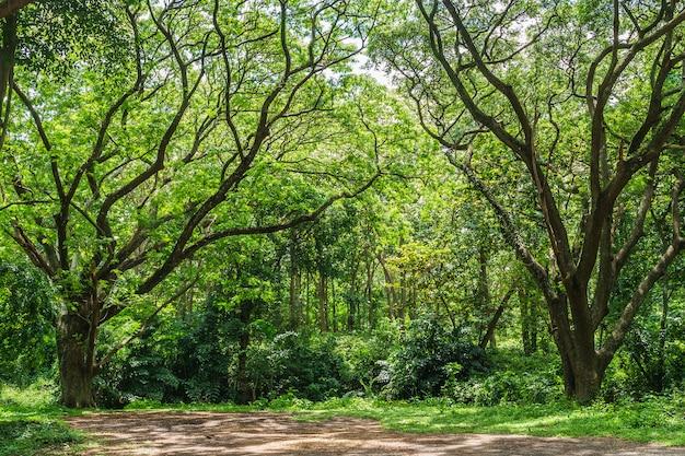 Panoramischer tropischer regenwalddschungel in thailand