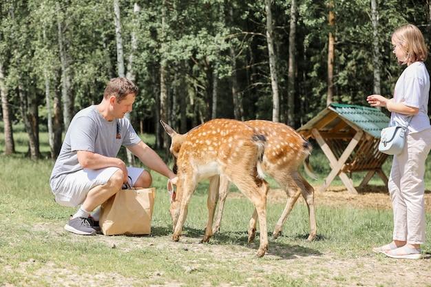 Papa und tochter füttern gefleckte bambi-hirsche in einem nationalpark