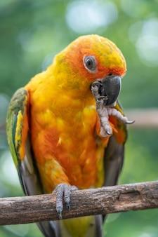 Papagei auf zweigbaum.