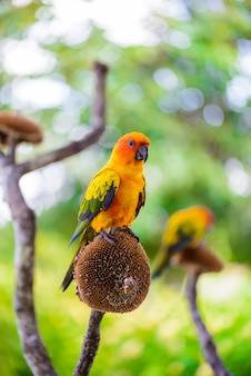 Papagei, bunter papagei, macaw papagei, bunter macaw