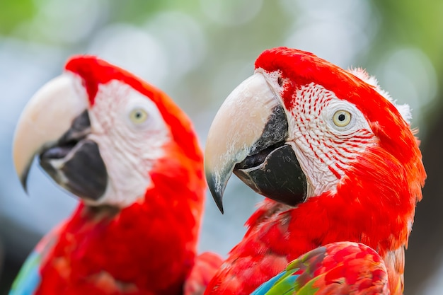 Papagei, der auf einem baum im wald steht.