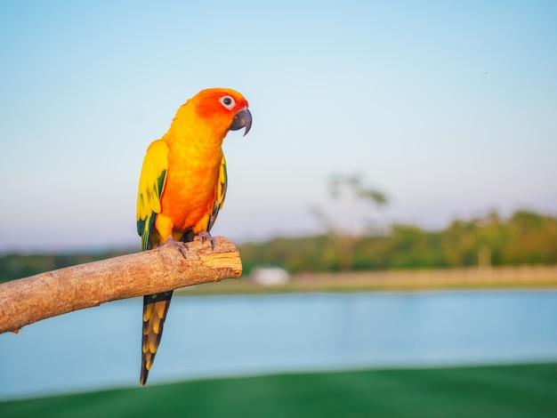 Papagei ist niedliches exotisches haustier
