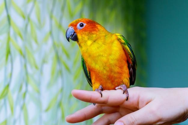 Papagei kratzt sich am schnabel mit seinen klauen