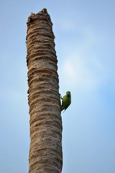 Papagei verstecken und suchen