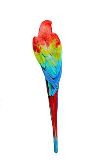 Papagei zurück