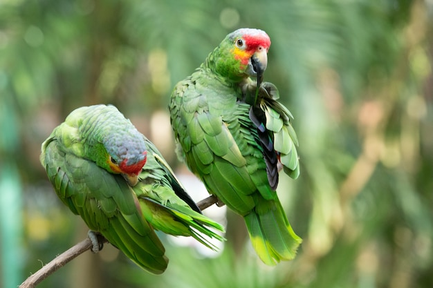 Papageienvogel sitzt auf der barsch