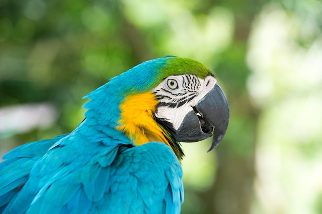 Papageienvogel sitzt auf der stange