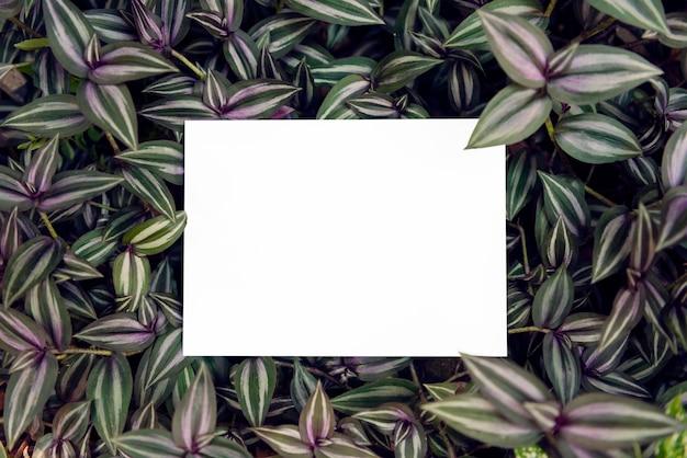 Papierkarte des leeren grußes auf grünem blatt für modellschablonendesign-hochzeitskarte.