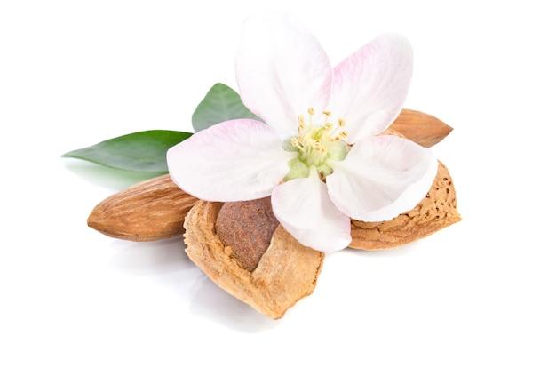 Paradiesblume mit mandeln auf weißem hintergrund