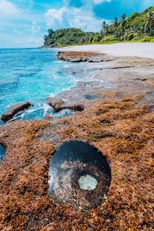 Paradiesstrand mit granitfelsen, palmen, weißem sand und blauem klarem wasser an einer rauen küste von anse bazarca, seychellen.